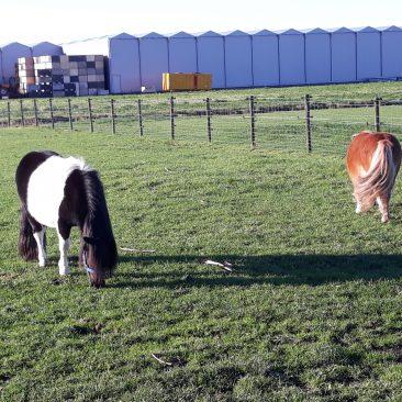ponies 071